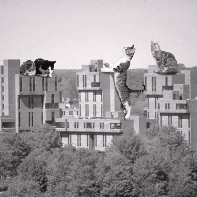 Three cats superimposed onto a photo of the Ellicott Complex on UB's North Campus.
